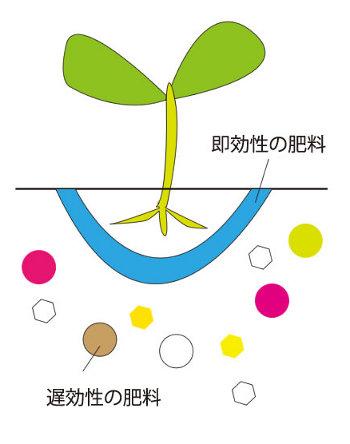 sokkou_chikou.jpg